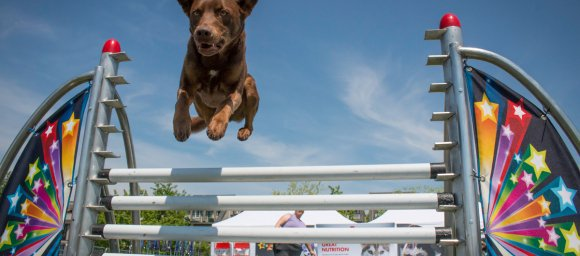 super dogs show